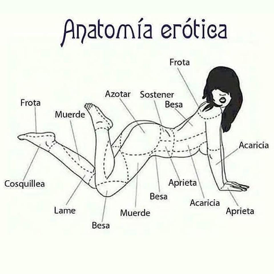 anatomia erotica mujer